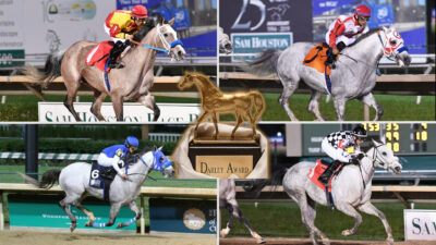 2019 Horse of the Year Nominees