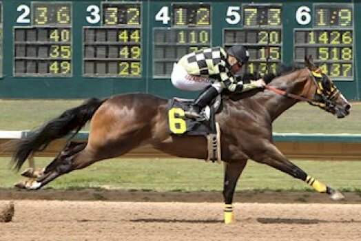 A Quarter Horse—Shaken, Not Stirred  May 24, 2016